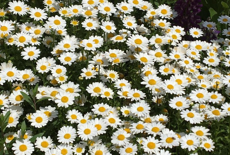 名も知らぬ小さな白い春の花
