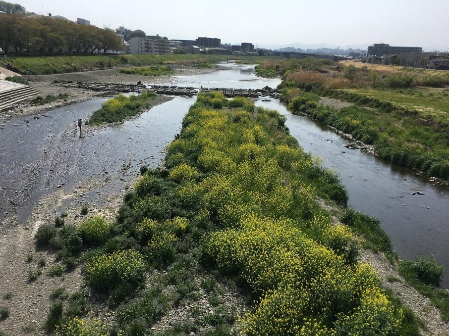 浅川の中州
